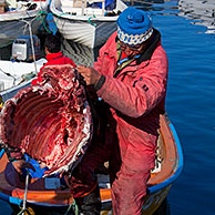 Inuit hunters unload muskox (Ovibos moschatus) meat from boat in the Uummannaq harbour, North-Greenland, Greenland