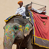 Mahout riding decorated Indian elephant for transporting tourists at Amer Fort / Amber Fort near Jaipur, Rajasthan, India